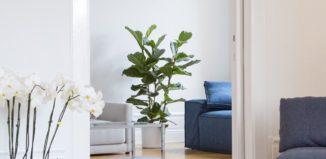 Design-Sofa Renetti